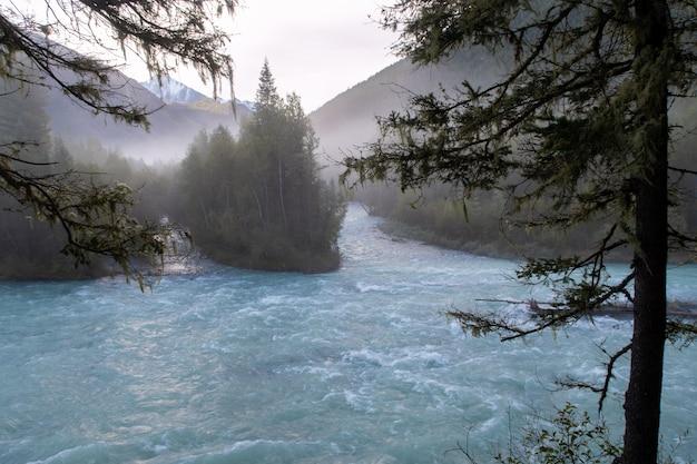 Nevoeiro turquesa kucherla montanha geleira rio na floresta. parque nacional belukha, república de altai, sibéria, rússia
