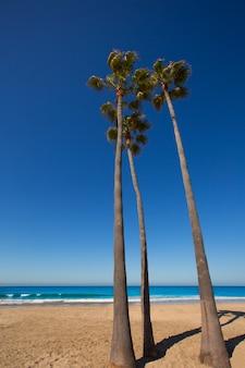 Newport beach califórnia palmeiras na praia