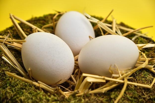 Ninho de cesta de páscoa com ovos de páscoa em fundo amarelo close-up