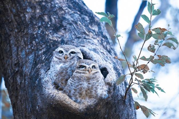 Ninho de coruja em uma árvore