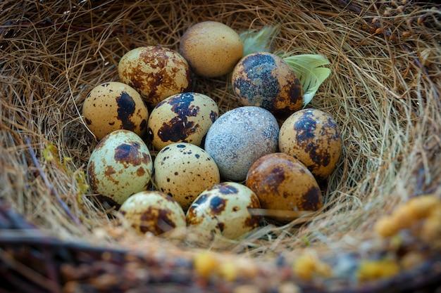 Ninho de pássaro com ovos