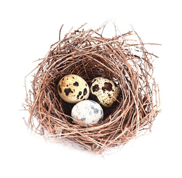 Ninho de pássaro e ovo isolado no branco