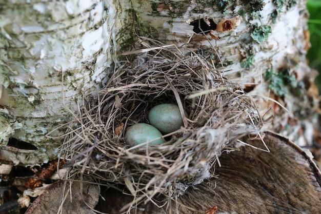 Ninho de pássaro na natureza