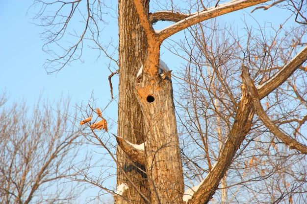 Ninho de pássaro no tronco de árvore oca