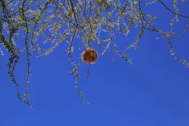 Ninho de pássaro nos galhos