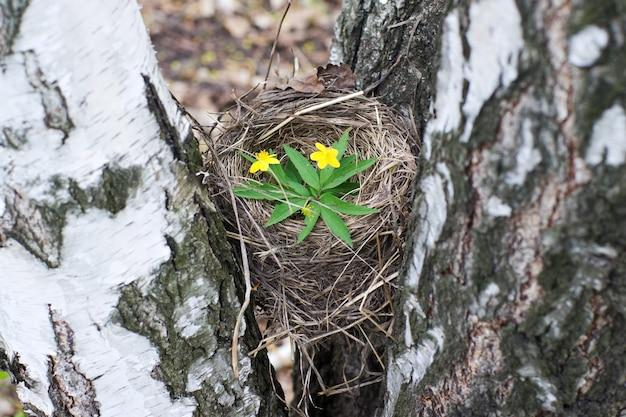 Ninho de pássaros vazio close-up símbolo da família e do lar