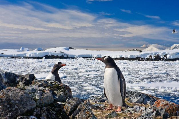 Ninho de pinguins