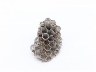 Ninho de vespas, insetos