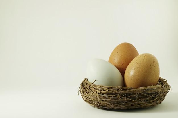 Ninho do pássaro ovos em uma cena branca.