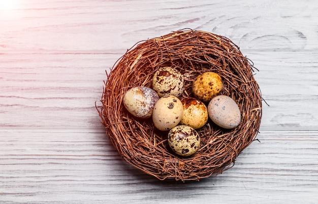 Ninho marrom com ovos de codorna salpicado de fragilidade sobre o fundo claro.