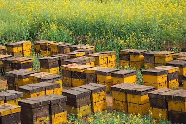 Ninhos de abelha em um jardim de flores