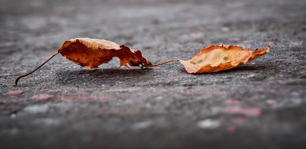 No chão há duas folhas secas caindo da árvore