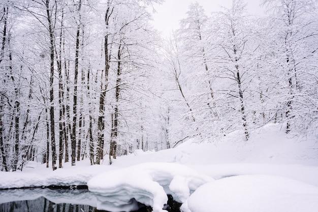 No extremo norte frio, as árvores da floresta estão cobertas de neve branca, clima de inverno