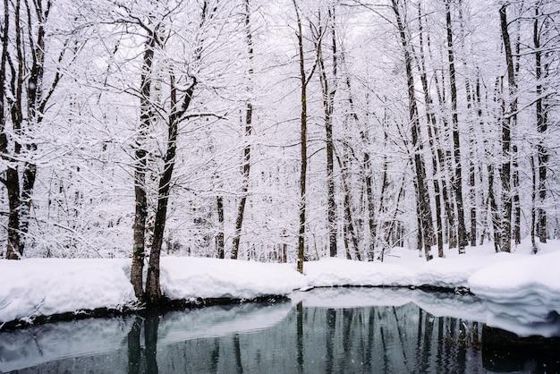 No extremo norte frio na floresta há um lago, as árvores estão cobertas de neve branca, natureza de inverno