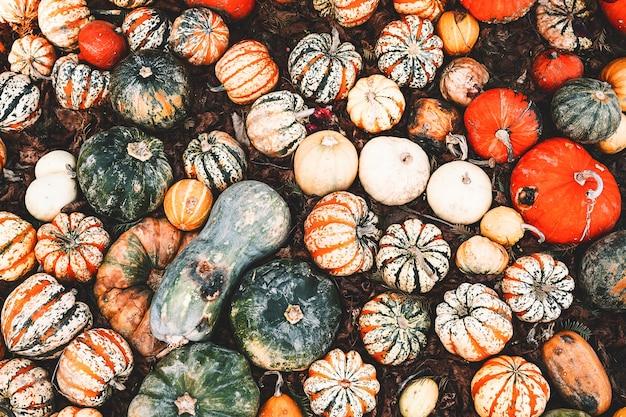 No outono, colha abóboras coloridas em diferentes variedades no mercado agrícola ou festiva sazonal