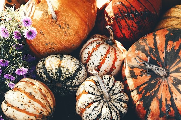 No outono, colha abóboras coloridas em diferentes variedades no mercado agrícola ou no festival sazonal