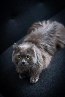 No sofá, um gato está sentado olhando para algo