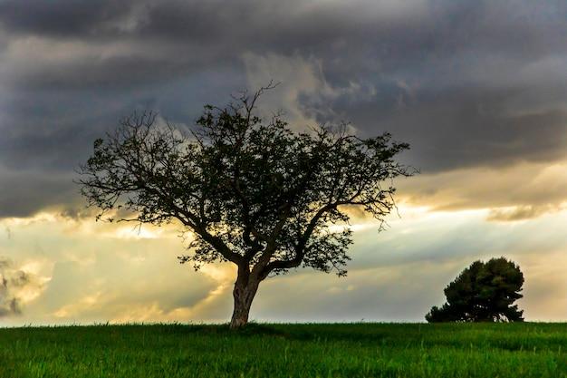 Nogueira no meio do prado verde ao pôr do sol em um dia com nuvens e raios de sol.