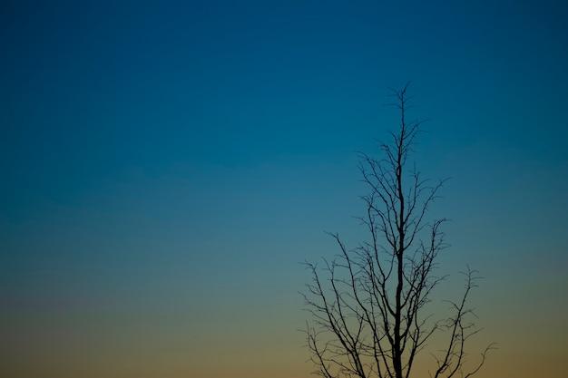 Noite de céu azul escuro ao pôr do sol com a silhueta de uma árvore solitária