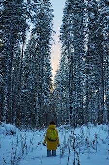 Noite em uma floresta escura, uma caminhada na floresta antes do natal