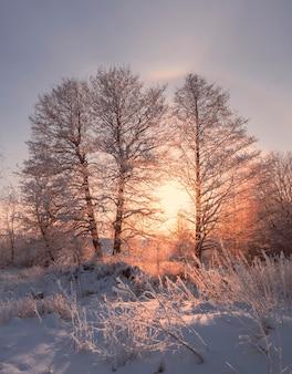 Noite gelada de inverno, árvores na neve e geadas no fundo do pôr do sol e auréola ensolarada