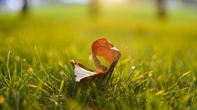 Noite quente de primavera com um prado colorido e vibrante durante o pôr do sol. silhueta da grama à luz do sol dourado. paisagem de bela natureza com raios solares.