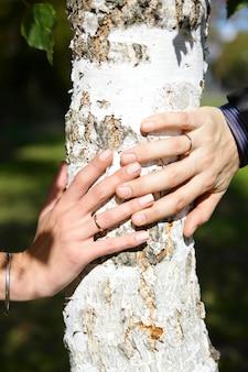Noiva e noivo mãos no tronco de uma árvore