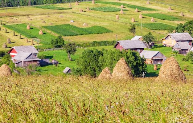 Nos arredores de uma vila de montanha de verão com montes de feno no campo (cárpatos, ucrânia)
