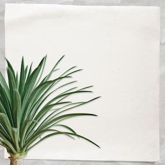Nota de papel com palmeira agave