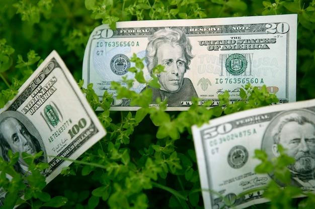 Notas de dólar, crescendo de uma planta verde, beneficia a metáfora de crescimento