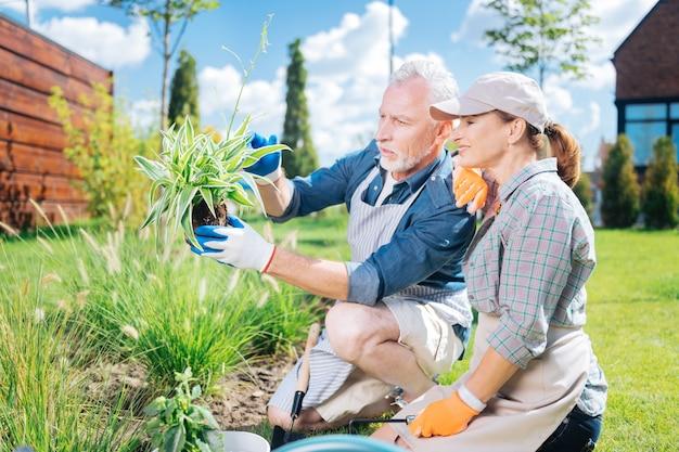 Nova planta. homem maduro barbudo e sua esposa sorridente e atraente se sentindo satisfeitos enquanto olham para sua nova planta verde