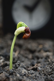 Nova planta que cresce fora do solo com despertador, sucesso nos negócios