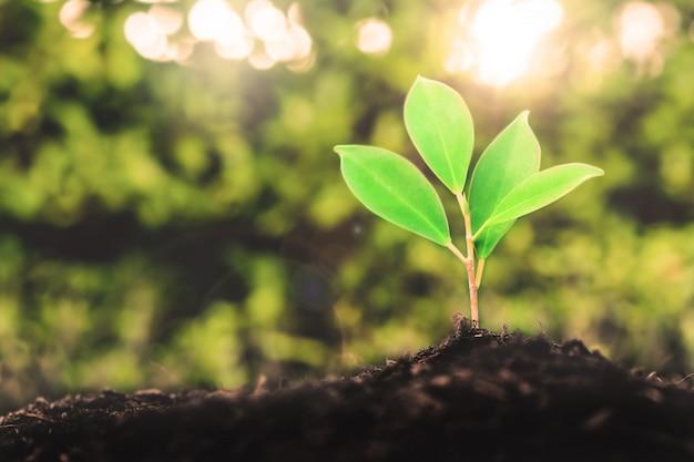Nova vida de mudas de plantas jovens cresce em solo preto