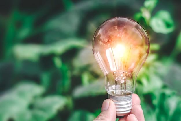 Novas idéias com a mão segurando a lâmpada contra a natureza no fundo da árvore turva.