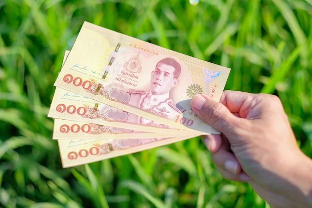 Novo design da nota 100 tailandesa com fundo verde de fazenda de arroz