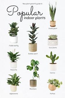 Novo guia de pais de plantas para plantas de interior populares