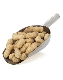 Nozes amendoim isolado no branco