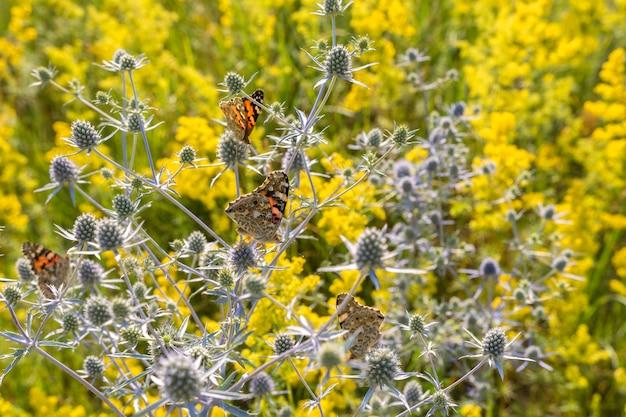 Numerosas borboletas coletando néctar das flores no prado