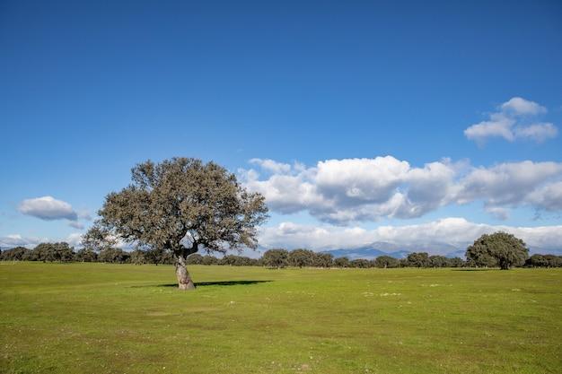 Nuvens bonitas em um prado solitário