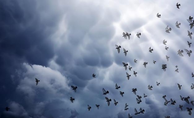 Nuvens de chuva no céu e um bando de pombos. as nuvens escuras e cinzentas no céu e os raios do sol iluminam a terra. o conceito religioso de fé, os raios do sol iluminam o caminho.