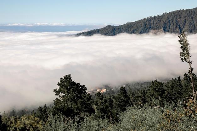 Nuvens densas na floresta da montanha