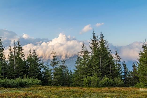 Nuvens sobre o topo de uma montanha com verde floresta de pinheiros e grama prado