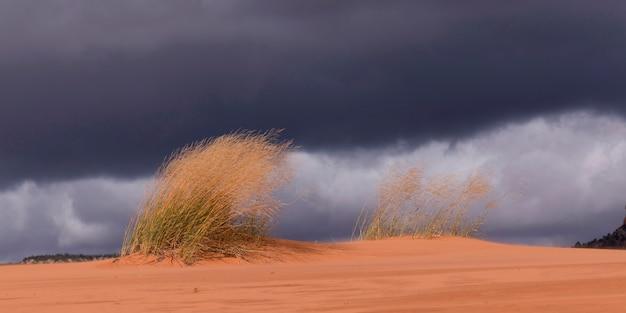 Nuvens, sobre, um, deserto, coral, cor-de-rosa, dunas areia, parque estado, utah, eua
