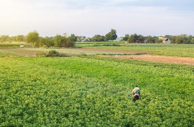 O agricultor com um pulverizador de névoa processa a plantação de batata.