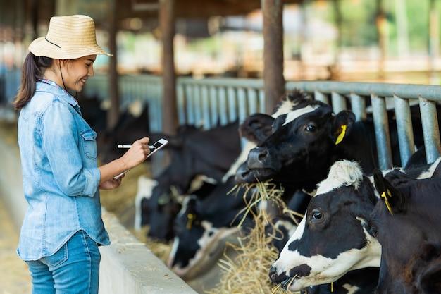 O agricultor tem detalhes de gravação no tablet de cada vaca na fazenda.