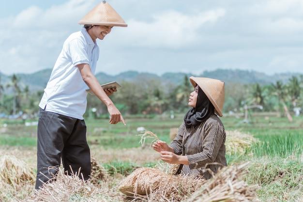 O agricultor usa o tablet com um gesto do dedo para apontar para o arroz colhido juntos no campo de arroz durante o dia
