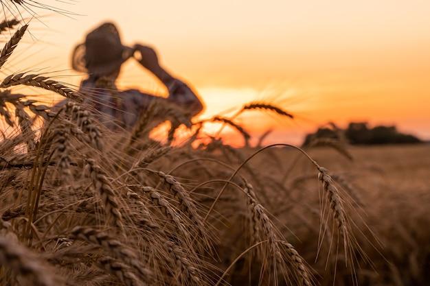 O agricultor verifica a colheita de trigo o conceito de uma rica colheita em um campo agrícola