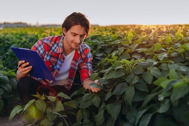 O agrônomo de sorriso em um campo que toma o controle do rendimento e toca em plantas no por do sol.