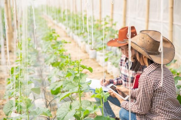 O agrônomo examina as mudas de melão em crescimento na fazenda, agricultores e pesquisadores na análise da planta.