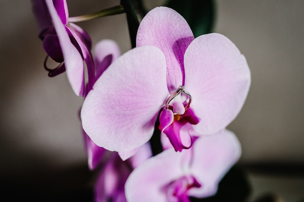 O anel de noivado de diamante da noiva está colocado sobre uma orquídea de flor rosa, roxa e violeta